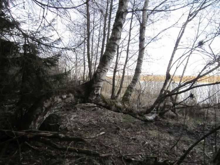 anomálie větví