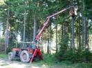 harvestorová těžba 2008