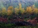 podzim se hlásí 2008