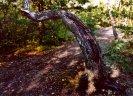 najdete zde i zajímavě rostlé stromy