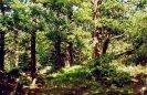 Prehistorické hradiště na Plešivci :: divoký les