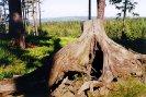 Hřebenovka mezi Třemšínem a Henštěm - Holý vrch