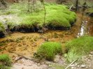 typicky brdskej potok