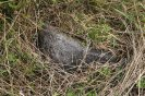 Poslední nalezený  patník na trase