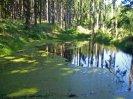 rybníček U poustevníka