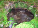 studánka nad Třítrubeckým potokem