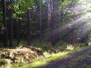 hloubka lesa