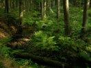 Hraniční potok