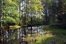 rybníček na Sklenné Huti