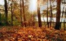 podzim na Štěpánském rybníce