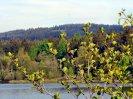 jaro na Lázské