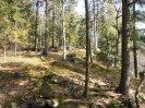 krnící les na Lipovsku