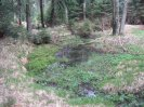 rybníček v pramenech Bílého potoka
