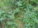 rašeliniště a zakrslá vrba ušatá