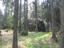 odvážená dřevní hmota