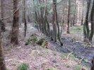 olše lepkavá okupuje koryta potoků