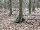anomálie kořenů